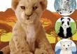 Robomaluchy Alive cubs - Foczka
